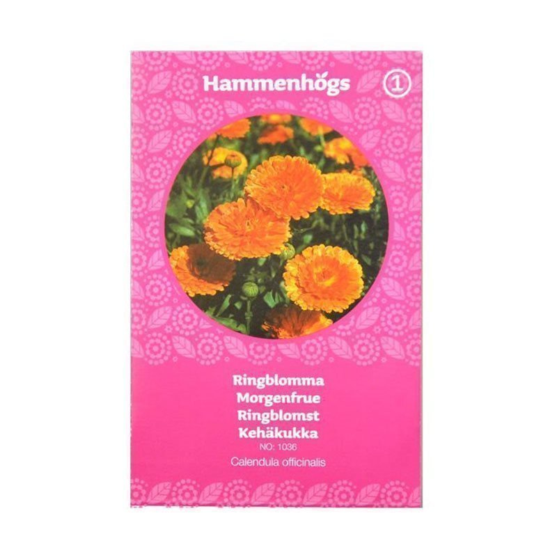 Hammenhögs Siemenpussi Kehäkukka Oranssi