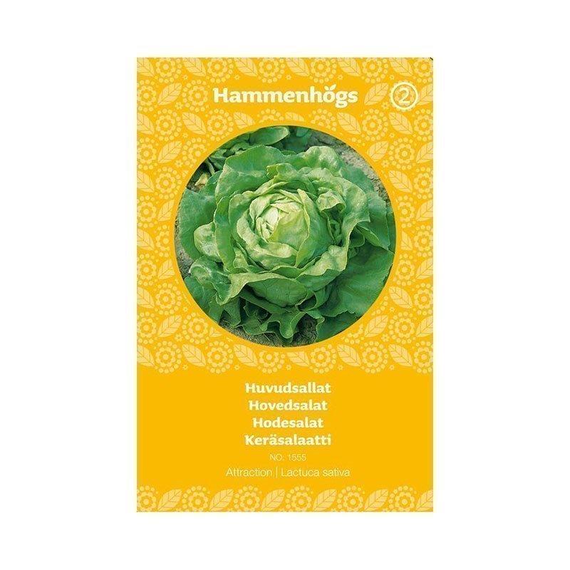 Hammenhögs Siemenpussi Keräsalaatti