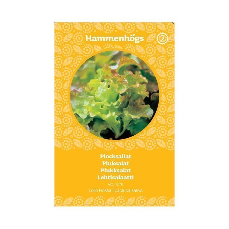 Hammenhögs Siemenpussi Lehtisalaatti