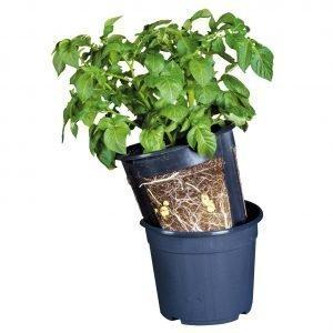 Potatopot 30 Cm Perunaruukku