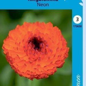 Siemen Calendula Officinalis Neon Tarhakehäkukka