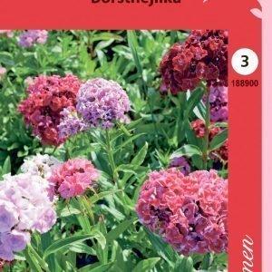 Siemen Dianthus Barbatus Harjaneilikka Kerrottu