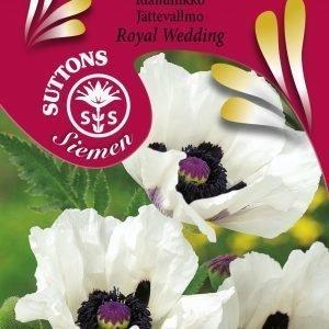Siemen Idänunikko Royal Wedding Hr4