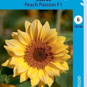 Siemen Isoauringonkukka Peach Passion F1
