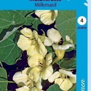 Siemen Isoköynnöskrassi Milkmaid