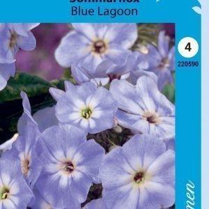 Siemen Kesäleimu Sinivalkoiset Kukat