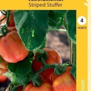 Siemen Kh-Tomaatti Striped Stuffer