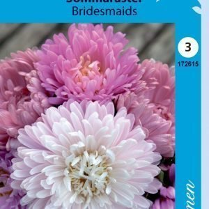 Siemen Kiinanasteri Bridesmaids