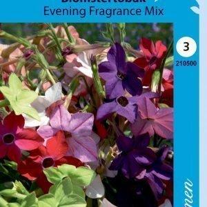 Siemen Koristetupakka Evening Fragrance