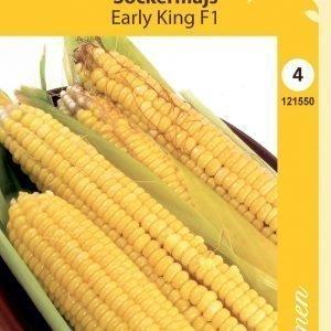 Siemen Maissi Early King