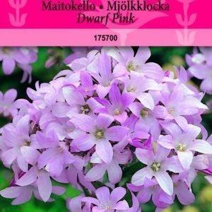 Siemen Maitokello Dwarf Pink