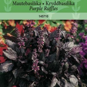 Siemen Maustebasilika Purple Ruffles