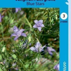 Siemen Neito Blue Stars