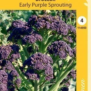 Siemen Purple Sprouting Parsakaali