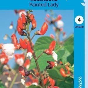 Siemen Ruusupapu Painted Lady