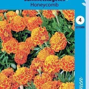 Siemen Samettikukka Honeycomb