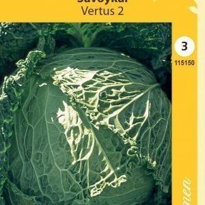 Siemen Savoijinkaali Eisenkopf/Vertus 2