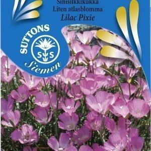Siemen Sinisilkkikukka Lilac Pixie