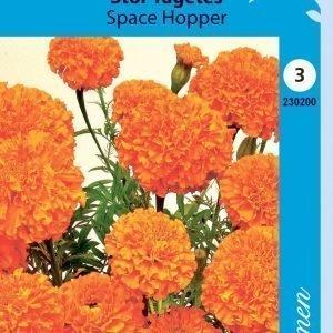 Siemen Tagetes Erecta Space Hopper Isosamettikukka