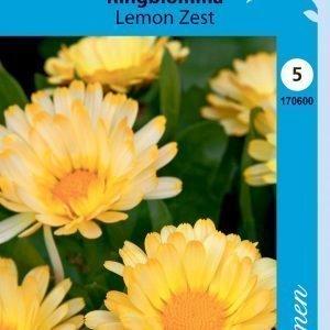 Siemen Tarhakehäkukka Lemon Zest