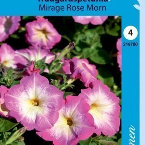 Siemen Tarhapetunia Mirage Rose Morn