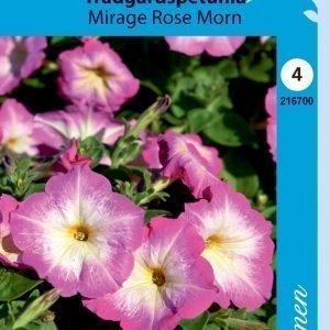 Siemen Tarhapetunia Mirage Rose Morn