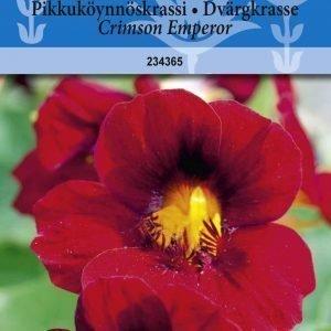 Siemen Tropaeolum Minus Crimson Emperor Pikkuköynnöskrassi