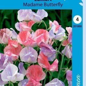 Siemen Tuoksuherne Madame Butterfly