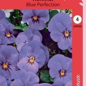 Siemen Viola Cornuta Blue Perfection Sarviorvokki