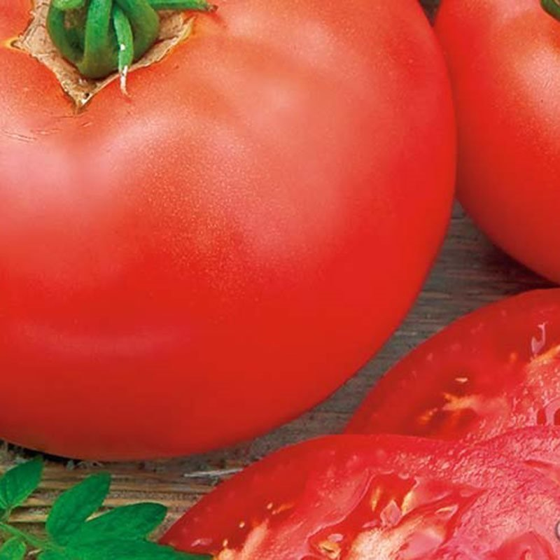 Siemenpussi Tomaatti Moneymaker