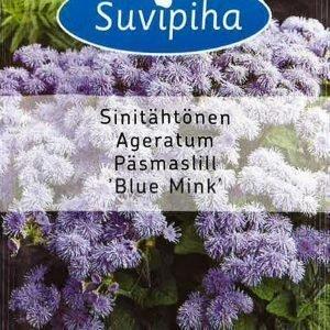 Suvipiha Ageratum Blue Mink Sinitähtönen