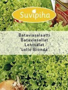 Suvipiha Bataviasalaatti Lollo Bionda