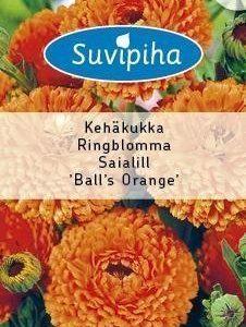 Suvipiha Calendula Balls Orange Kehäkukka