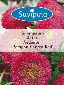 Suvipiha Callistep Kiinanasteri Pompon Cherry Red