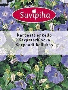 Suvipiha Campanula