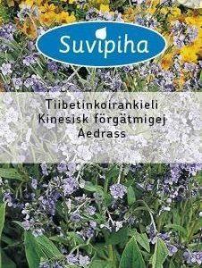 Suvipiha Cynoglossum Amabile Tiibetinkoirankieli