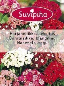 Suvipiha Dianthus Barbatus