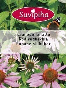 Suvipiha Echinacea Purpurea Kaunopunahattu
