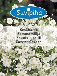 Suvipiha Gypsophila