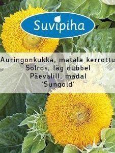Suvipiha Helianthus Auringonkukka