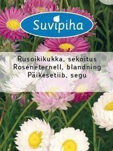 Suvipiha Helipterum