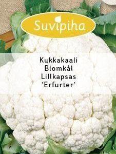 Suvipiha Kukkakaali Erfurter