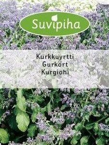 Suvipiha Kurkkuyrtti (purasruoho)