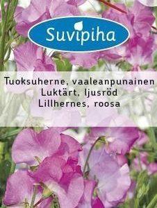 Suvipiha Lathyrus