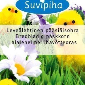 Suvipiha Leveälehtinen Pääsiäisohra