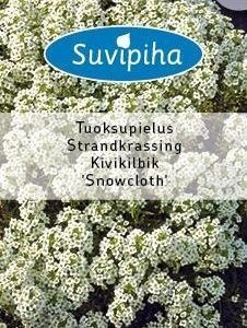 Suvipiha Lobularia Maritima Snowcloth