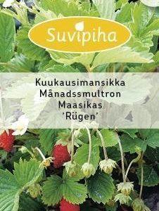 Suvipiha Mansikka