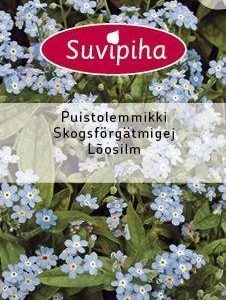 Suvipiha Myosotis Sylvatica