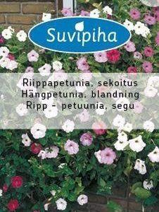 Suvipiha Petunia
