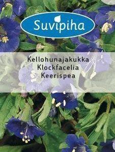 Suvipiha Phacelia